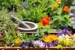 Leinwandbild Motiv Heilpflanzen aus dem Garten