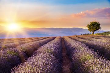 Sunset over a violet lavender field in Provence, France.