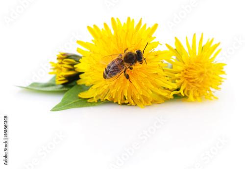 Fotobehang Bee Honeybee and yellow flower