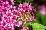 Bee gathering nectar - 161693335