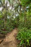 Path in lush rainforest