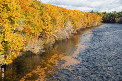 river and colorful autumn forest at the bank with floating fallen leaves on water surface
