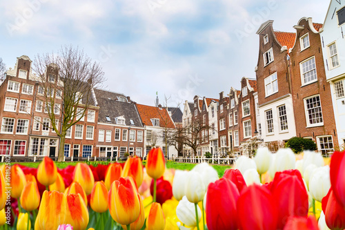 Begijnhof courtyard with historic Holland houses panorama with tulips in Amsterdam, Netherlands
