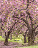 Central Park, New York City spring