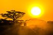 Quadro safari jeep driving through savannah in the sunset