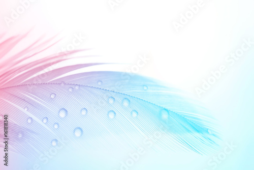 Background gentle airy texture of light feather with water drops macro. Tinted blue pink and purple pastel colour. Elegant romantic artistic image.