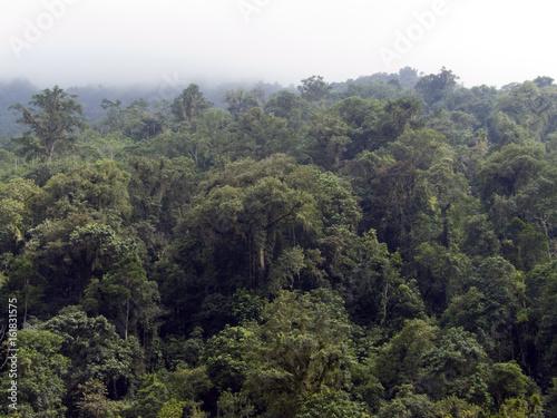 Bosques de Colombia