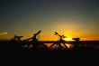 Bike on sunset background.