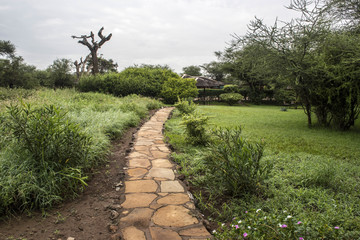 Savanna path in camp in africa