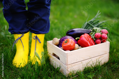 Wooden crate with fresh vegetables from farm