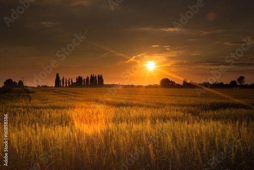 Sonnenuntergang im Kornfeld Poster