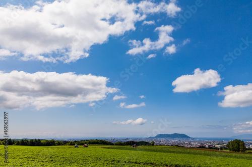 函館湾を見下ろす畑