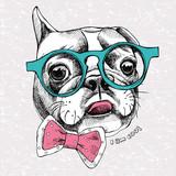 Portret Buldog francuski w okularach