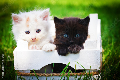 Black & white cats in white box.