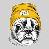 Portret Buldog francuski w żółtym kapeluszu Hipster.