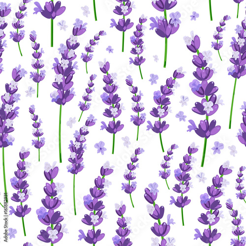 Seamless pattern of provence violet lavender flowers on a white background. Vector illustration. - 161882931