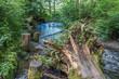 Des Moines Creek Landscape 2