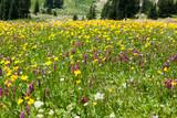 Wild Flowers - 161897318