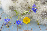 Summer flower background with fluffy dandelions