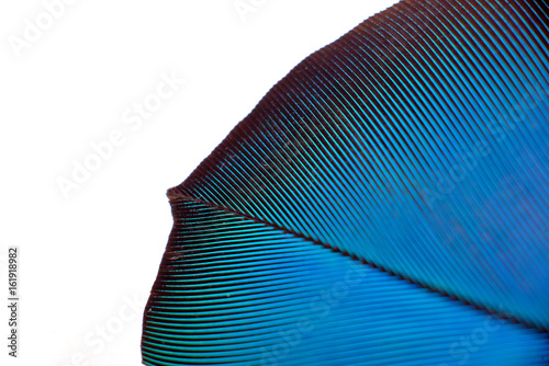 colourfull feather of parrot