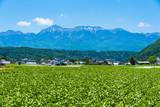 八ヶ岳と野辺山高原野菜