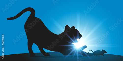 chat - souris - prédateur - proie - félin - chasse - danger