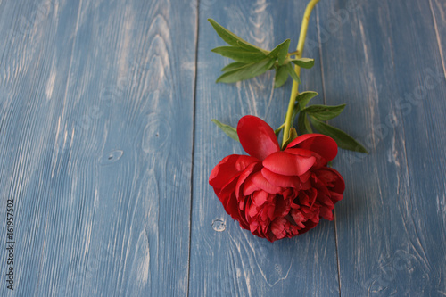 Dark red peonies on an old wooden background
