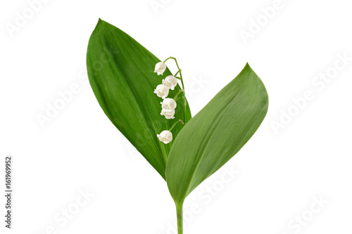 Aluminium Lelietjes van dalen Lily of the valley isolated on white background