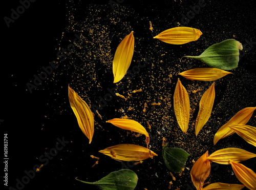 Sunflower petals and leaves with pollen isolated on black background