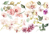 Beautiful watercolor set with orchids. Illustration - 161992151