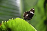 Butterfly on the green leaf - 162011963