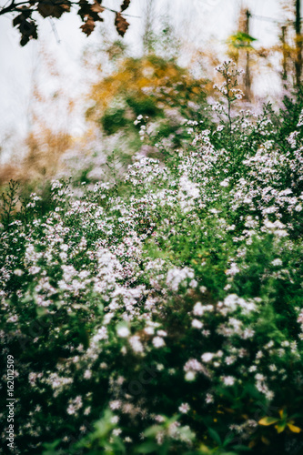 Small pinkish white flowers blossoming