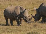 Two Rhinos in Pilanesberg NP