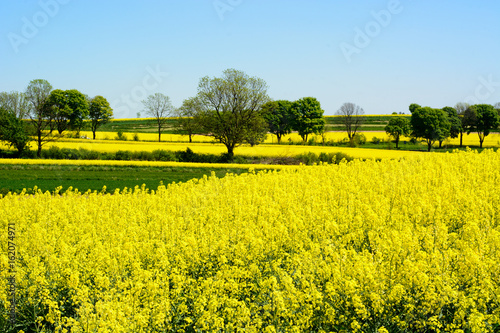 Aluminium Geel Landscape with rape flowers and blue sky