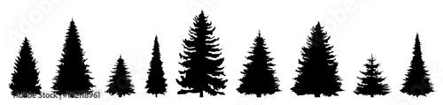 Silhouette Nadelbäume - 162118961
