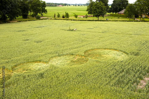 Deurstickers UFO Crop circle in a wheat field