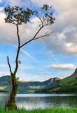 Lonely tree at Lake Butteremere