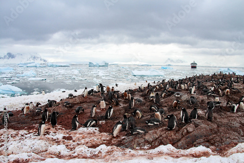 Fotobehang Pinguin Penguins on Cuverville Island, Antarctica