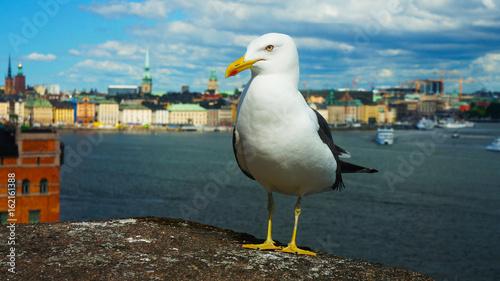 Staande foto Stockholm Seagull of Stockholm