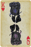 black rose, on a playing card - an hand drawn vector.