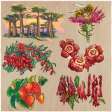 Flowers - An hand drawn colored vector pack. Line art. - 162167945
