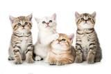 Cztery kocięta