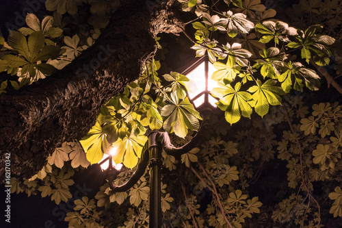 Poster Glowing street lamp among the leaves of a chestnut. Night scene