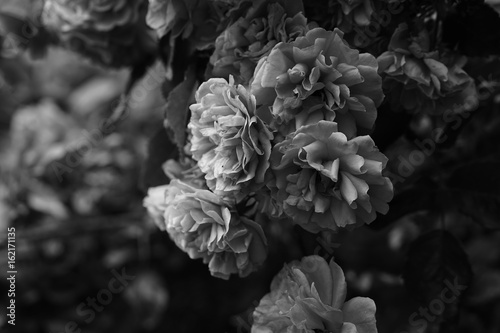 Blumen - 162171135