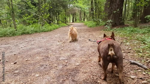Two small dogs walking in the wood