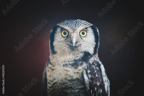 owl - 162201313