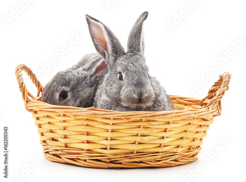 Little bunnies in a basket. Poster