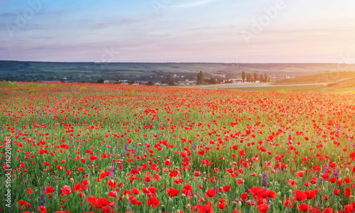Foto op Canvas Klaprozen Field with red poppies, colorful flowers against the sunset sky