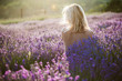 Naked woman posing in lavender field at sunset