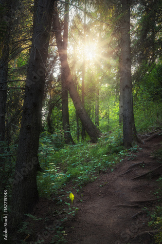 path in the forest illuminated by sunlight